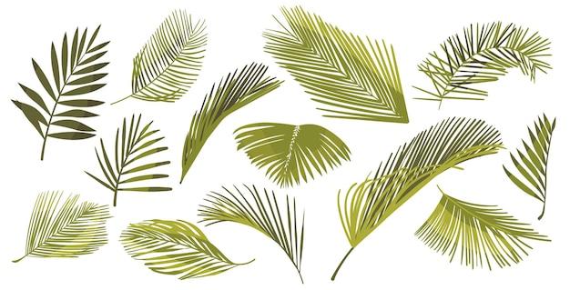 Zestaw liści palmy kokosowej na białym tle. elementy graficzne liści roślin tropikalnych, zielone gałęzie palm