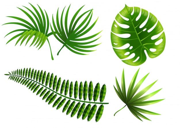Zestaw liści roślin tropikalnych. monstera, paproć, palma, juka.