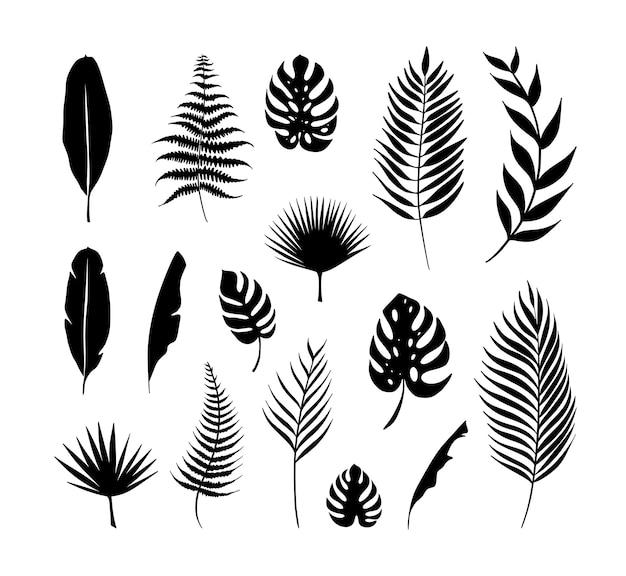 Zestaw liści roślin tropikalnych