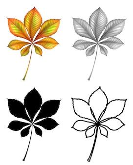 Zestaw liści roślin