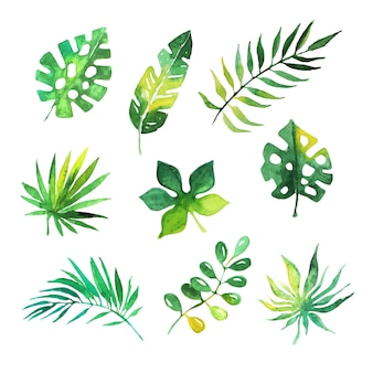 Zestaw liści tropikalnych, drzewa dżungli, ilustracje botaniczne akwarela