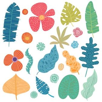 Zestaw liści tropikalnych. kreskówka lasów deszczowych liści na białym tle.