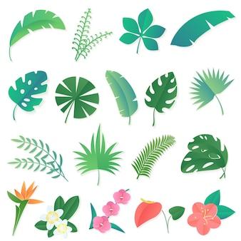 Zestaw liści tropikalnych. palma, liść bananowca, hibiskus, kwiaty plumeria