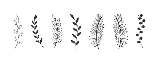 Zestaw liści