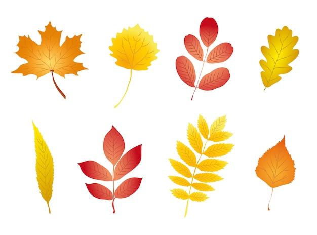 Zestaw liście jesieni