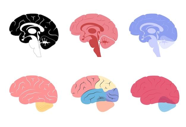 Zestaw logo mózgu dla kliniki neurologii. infekcja w ludzkim mózgu.