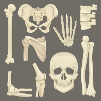 Zestaw lub różne ludzkie kości.