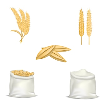 Zestaw makiet pszenicy chmielu jęczmiennego. realistyczna ilustracja 5 makiet pszenicy chmielu jęczmienia dla sieci web