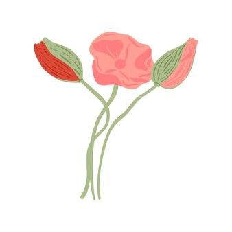 Zestaw maku z łodygą i bubsami na białym tle. kompozycja wiosenne kwiaty różowe i czerwone.