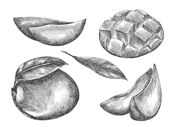 Zestaw mango. ręcznie rysowane.