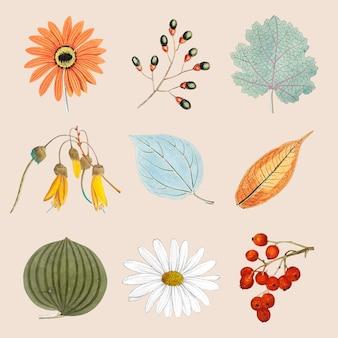 Zestaw mieszanych kwiatów i liści