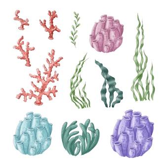 Zestaw morskich wodorostów clipart i koralowce