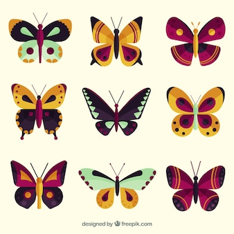 Zestaw motyli z różnych kolorach