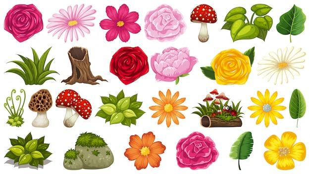 Zestaw motywów na białym tle obiektów z grzybami i kwiatami