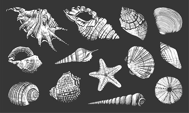 Zestaw muszli. ręcznie rysowane ilustracja powłoki. realistyczna natura oceanu morskiego mięczaka na białym tle na czarnym tle