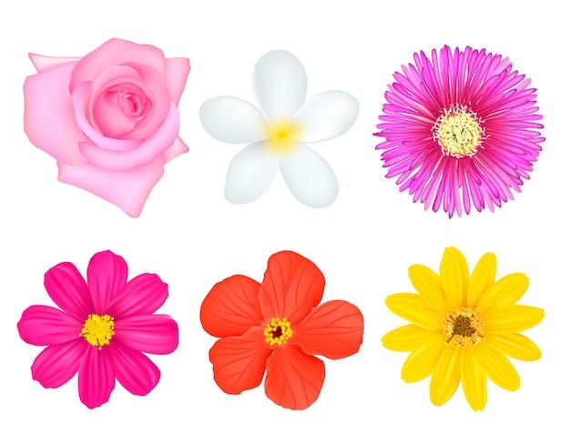 Zestaw na białym tle kolorowe kwiaty
