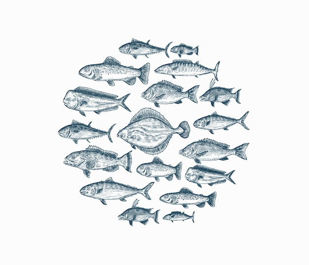 Zestaw na białym tle niebieski ręcznie rysowane ryb na białym tle