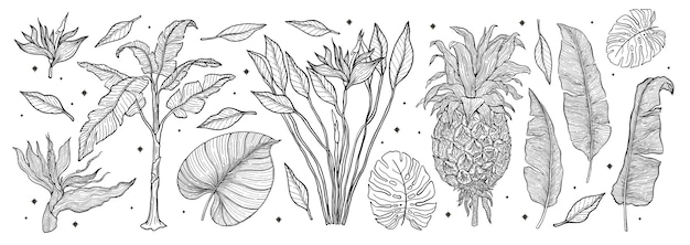 Zestaw natura tropikalnych roślin. zestaw ręcznie rysowane grafiki liniowej. palm tree jungle kwiatowy. ilustracja.