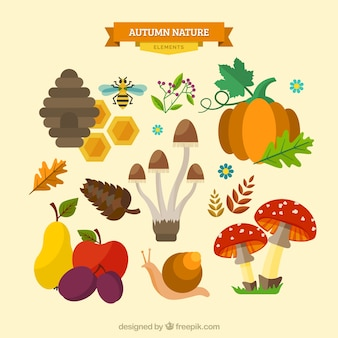 Zestaw naturalnych elementów jesienią