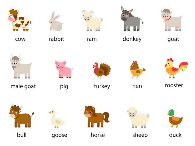 Zestaw nazwanych zwierząt gospodarskich w języku angielskim. zbiór ilustracji wektorowych.