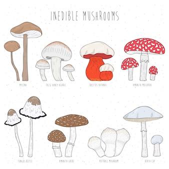 Zestaw niejadalnych grzybów. ręcznie rysowane wektor kolorowych ilustracji kolekcji.