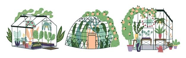 Zestaw nowoczesne domowe rośliny szklarniowe