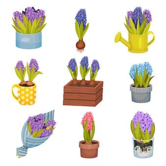 Zestaw obrazów hiacyntu w różnych doniczkach i wazonach.