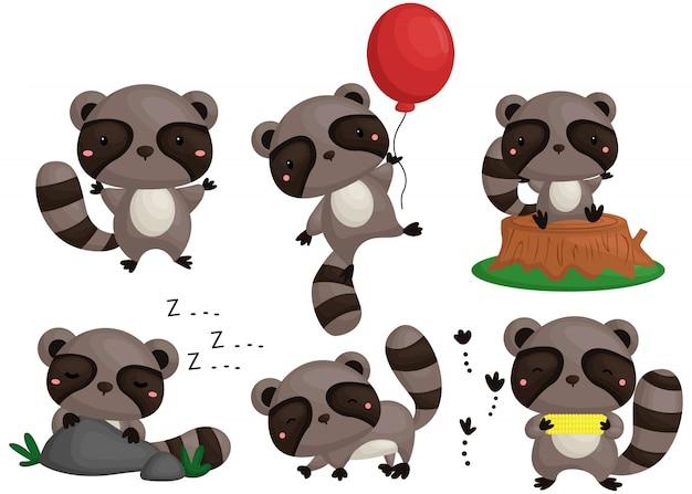 Zestaw obrazów raccoon