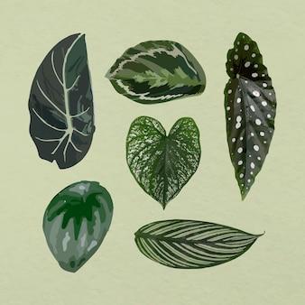 Zestaw obrazów tropikalnych liści wektor