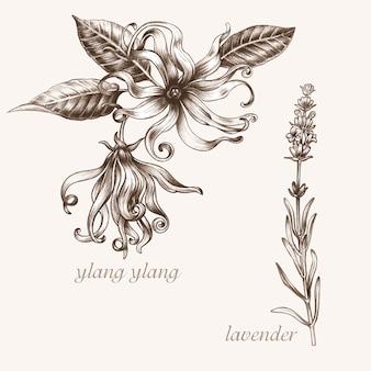 Zestaw obrazów wektorowych roślin leczniczych. biologiczne dodatki są. zdrowy tryb życia. ylang, lawenda.
