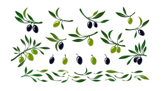 Zestaw oliwek czarne i zielone liście owoców makro