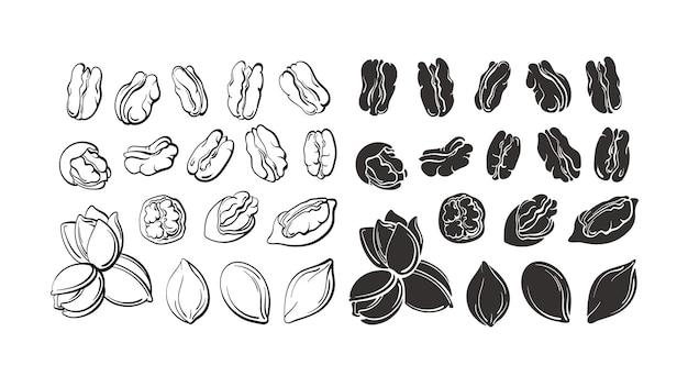 Zestaw orzechów pekan i narysowana sylwetka szkic vintage ilustracja botaniczna na białym tle