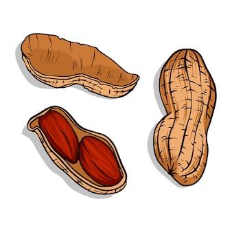 Zestaw orzeszków ziemnych szkic tuszem orzechów. ręcznie rysowane ilustracji wektorowych. styl retro. kolor ilustracji orzechów.