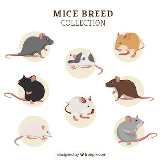 Zestaw ośmiu ras myszy
