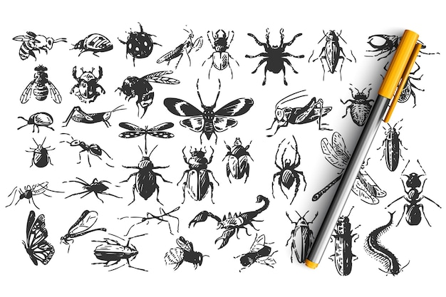 Zestaw owadów doodle