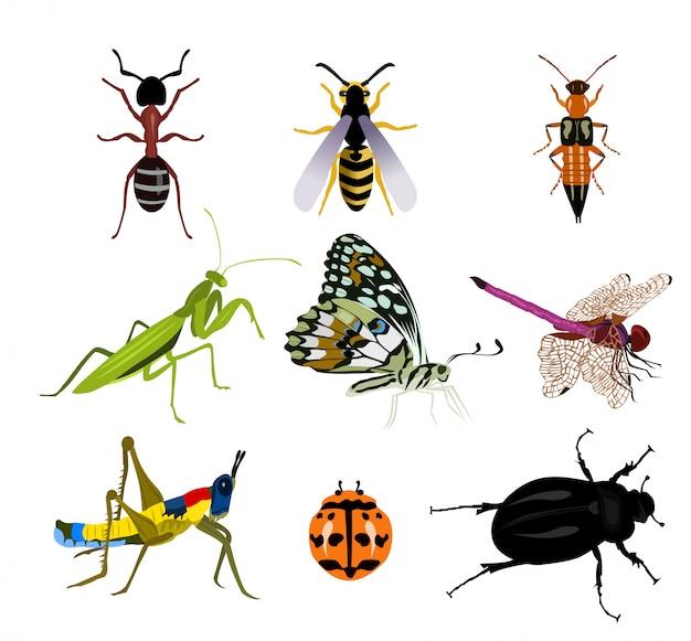 Zestaw owadów na białym tle