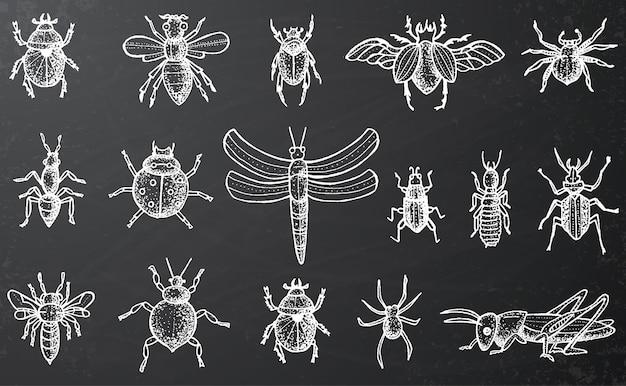 Zestaw owadów z chrząszczami, pszczołami i pająkami na czarnej tablicy. grawerowany styl.