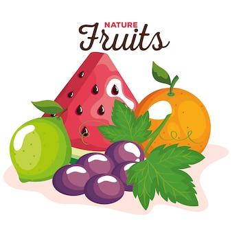 Zestaw owoców przyrody, ilustracja motyw zdrowej żywności ekologicznej
