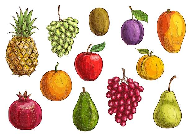 Zestaw owoców tropikalnych i egzotycznych. soczysty ananas, zielone i czerwone winogrona, granat, pomarańcza, kiwi, jabłko, gruszka, guawa, śliwka, morelowe mango