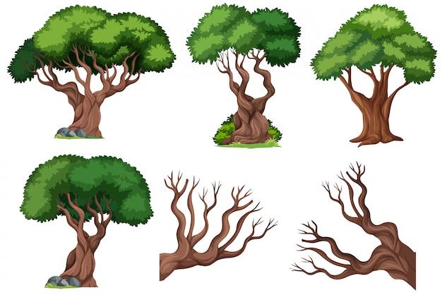 Zestaw ozdobnych drzew