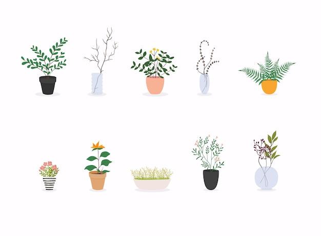 Zestaw ozdobnych roślin domowych na białym tle kolekcji