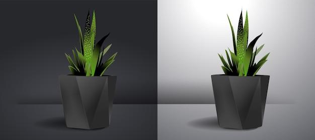 Zestaw ozdobnych roślin doniczkowych do dekoracji wnętrza domu lub mieszkania