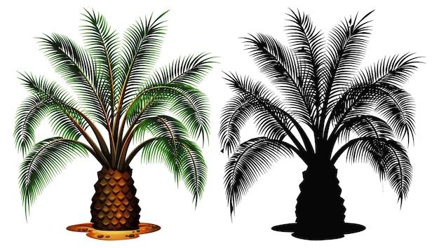 Zestaw palmy