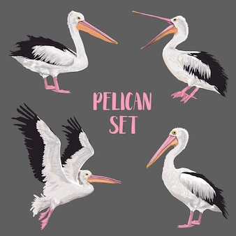 Zestaw pelikanów ptaków. zwierzęta na wolności