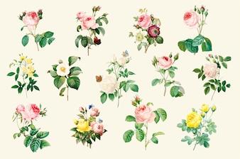 Zestaw pięknych róż kwitnących