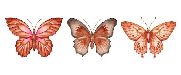 Zestaw pięknej, ręcznie rysowanej kolekcji motyli akwarela