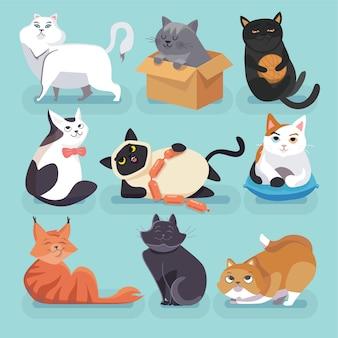 Zestaw pięknych kolorowych modnych kotów kreskówek. różne rasy.