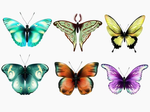 Zestaw pięknych kolorowych motyli