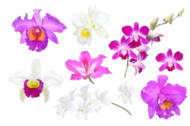 Zestaw pięknych kwiatów orchidei