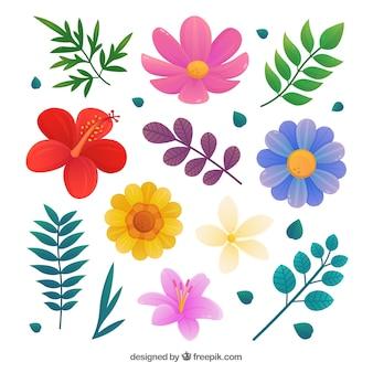 Zestaw pięknych kwiatów tropikalnych